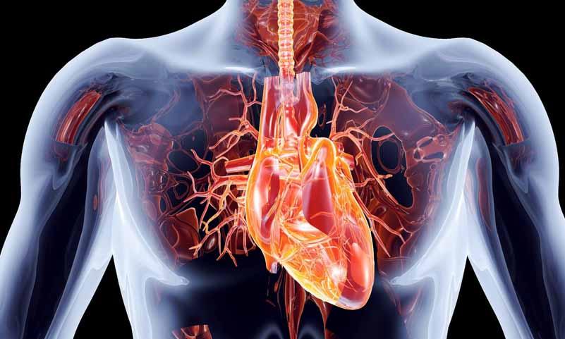 درمان حملات قلبی با استفاده از نوعی پروتئین
